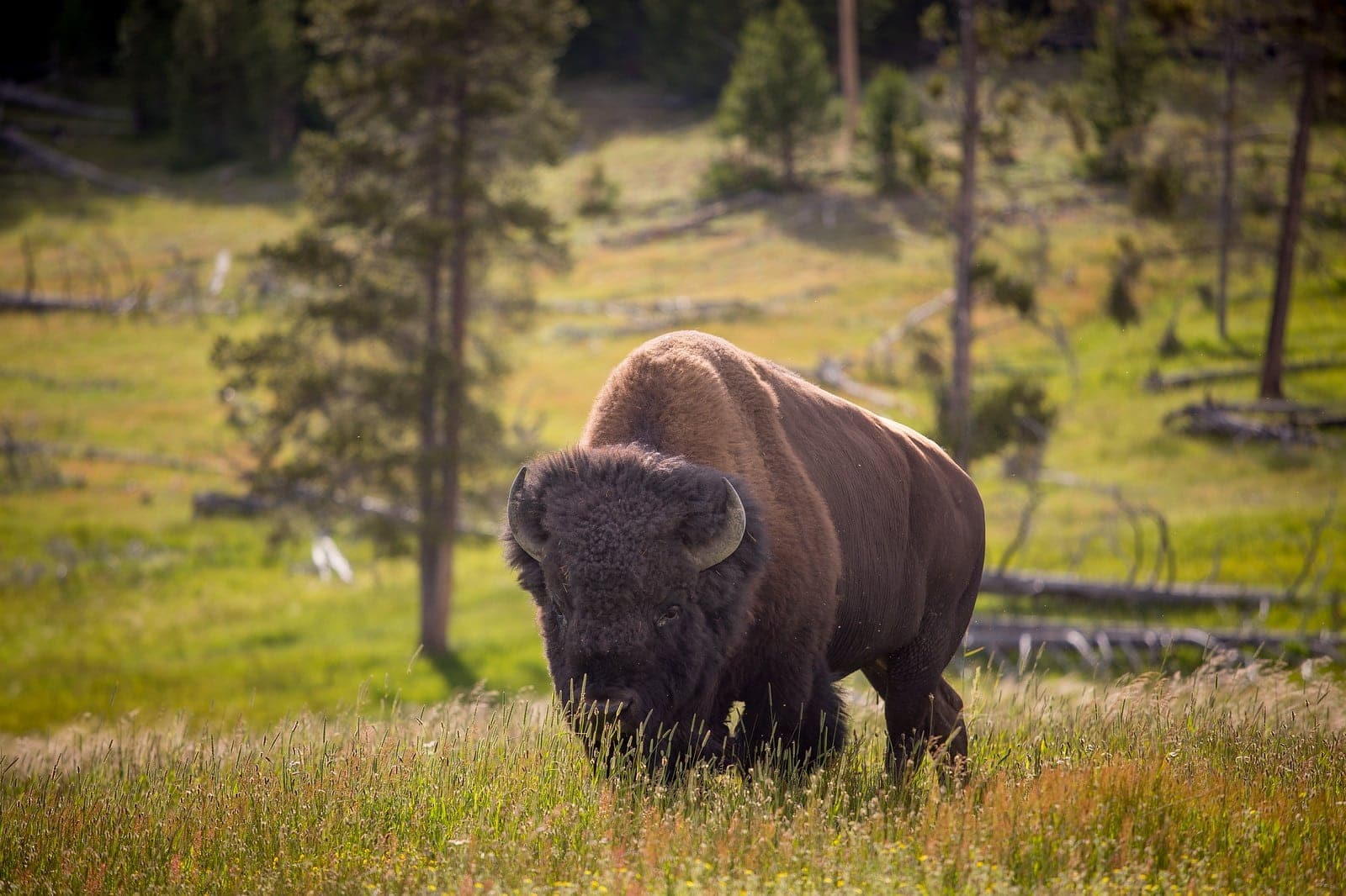 The amazing wildlife you can see while on a hiking program with Overland this summer