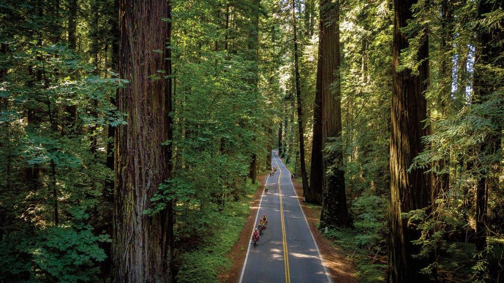 Teen ride bikes through a forest of redwoods taken from above.